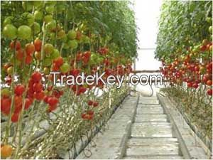 Grow bags for Plantations