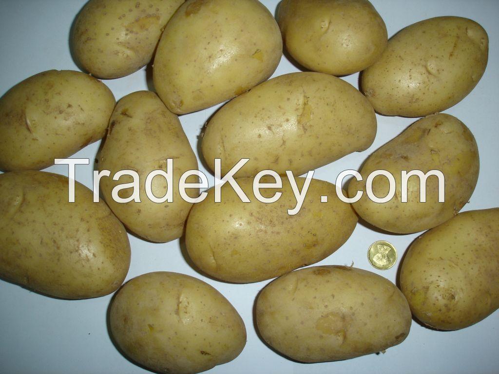 Fresh Russet Potato