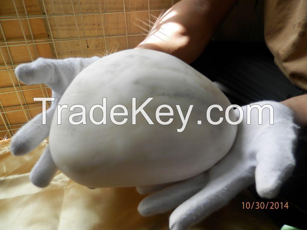 Giant peatl tradacna gigas clam