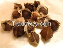 moringa seed,spinash seeds,pomkin seeds,vegetable seeds,oil seeds ,water melone seeds ,herbs seeds ,flower an all types of seeds for sale