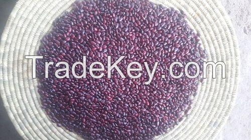 Organic Ethiopian Kidney Beans