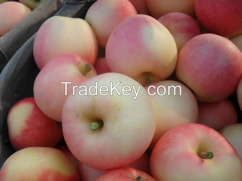 Fresh Royal Gala Apples, Fuji Apples, Golden Delicious Apples, Red Delicious Apples For sale