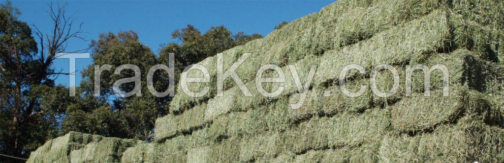 Lucerne Bales (Alfalfa Hay), Timothy Hay Bales