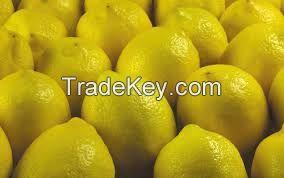 Fresh Lemon from South Africa