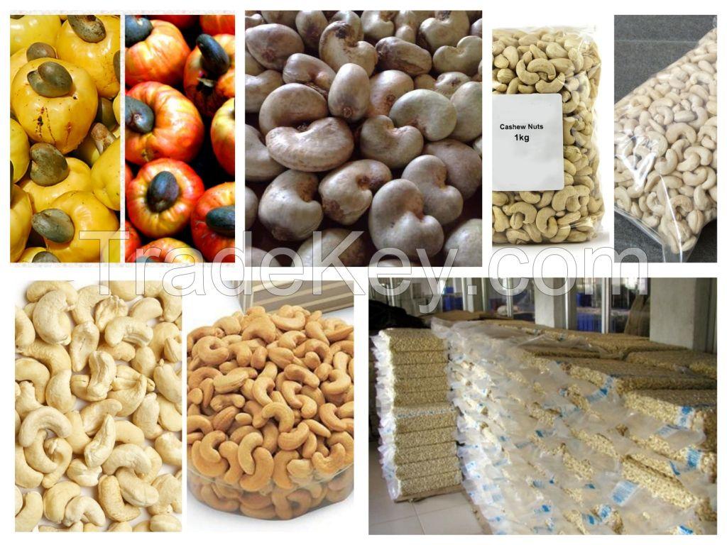 Dried Style S.A Cashew Nuts/ Cashew Kernels ww240/ ww320/ ws/ lp