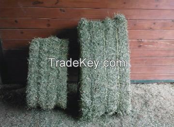 Alfalfa Hay, Oats Hay, Rhodes Grass Bales, Luzerme Alfalfa Dehydrated