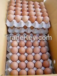 Chickens eggs