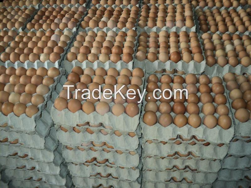 Fresh white eggs
