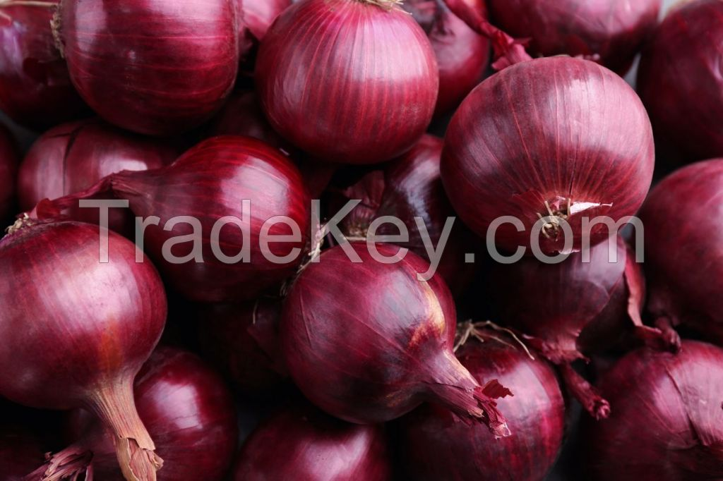 Freshly Harvest  Red Onion