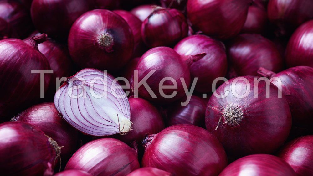 Commonly cultivated Red Onion