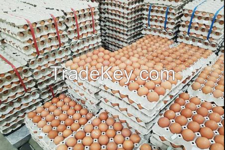 Fertile Eggs