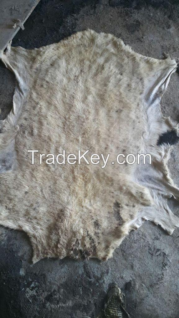 wet blue goat skin