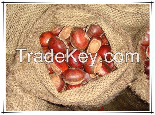 Wholesale Big Size Fresh Roasted Chestnut in shell