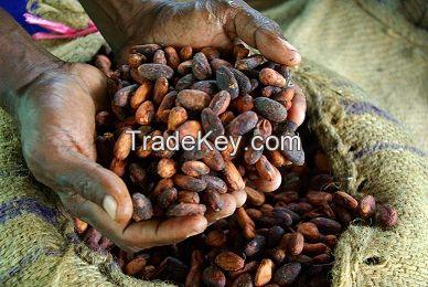 Good Quality Cocoa Beans Bulk Supplies
