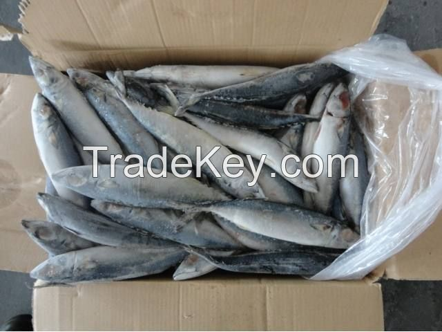 frozen seafood fish
