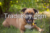 Red Deer Antler Dog Chews