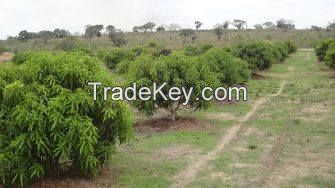 Land for sale in Kibaha, Dar es Salaam, Tanzania