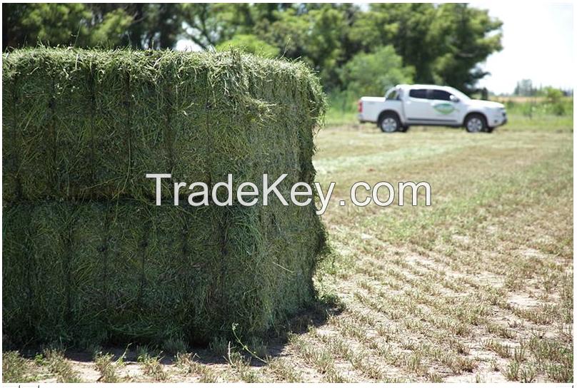 Alfalfa Fardos