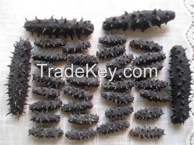 dry sea cucumber,price of dried cucumber manufacturer