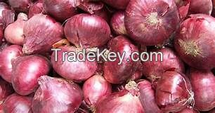 Shape onion  with best quality in 2018 ( Anna + 84988332914)