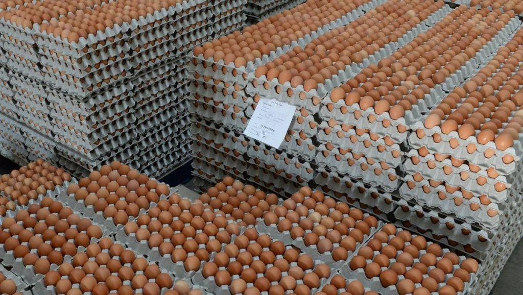 chicken table eggs Export fresh eggs