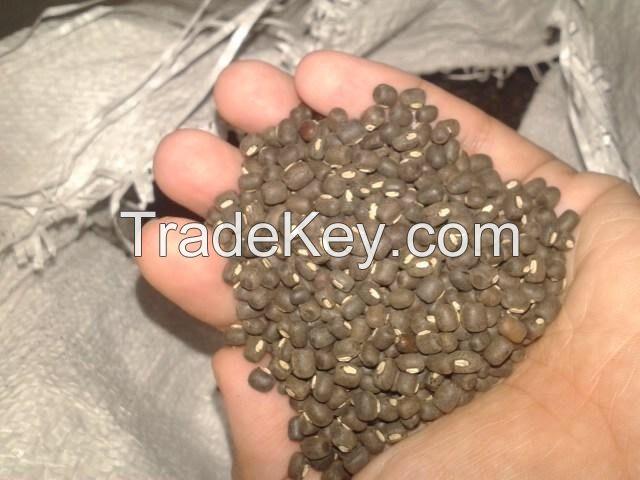 Black Matpe Beans (Thailand)