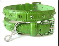 Pet Collar - Leash