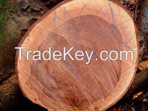 Sapele wood logs