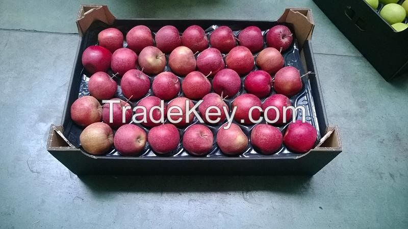 FRESH APPLES   ORANGES   OTHER FRUITS