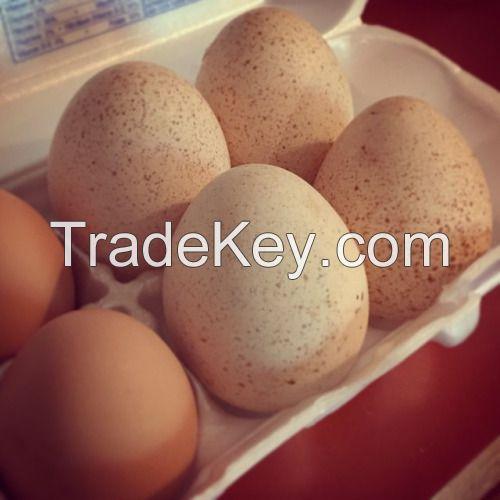 Fresh Chicken Turkey Eggs
