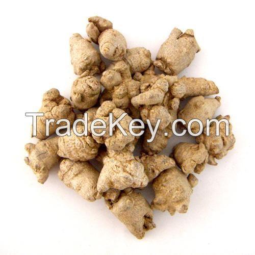 Tienchi ginseng/Panax notoginseng root
