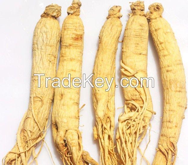 Natural Tonic white red raw ginseng/ Panax ginseng root