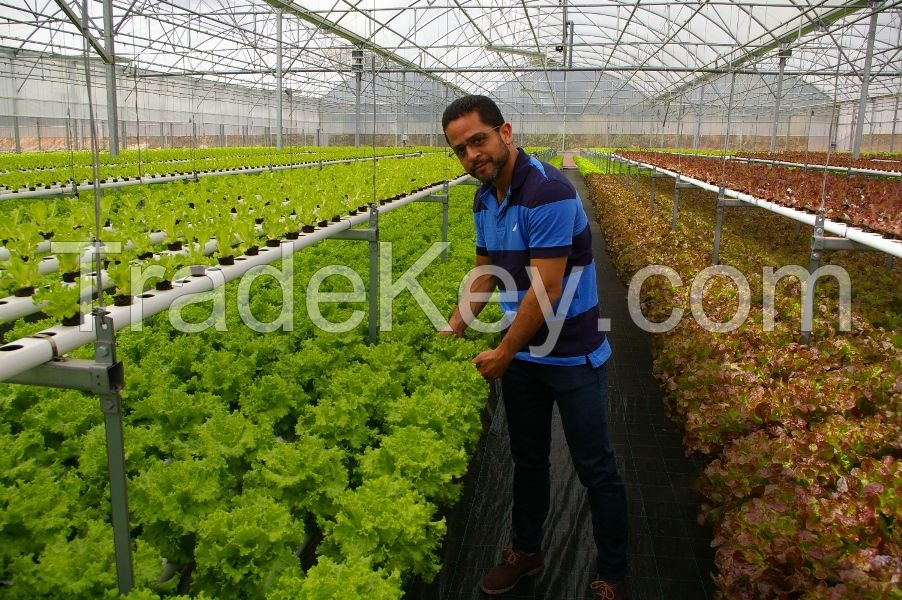 NFT / Hydroponic Systems and Solar Powered Greenhouses for Tomato and Vegetable Production