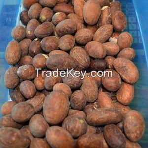 Garnicia kola (bitter kola), ginger, gall stones , raw material, herbs