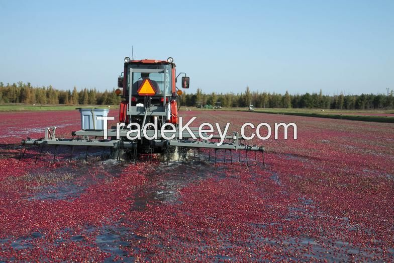 Dried Cranberry (half cut)