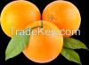 Fresh and Frozen Citrus Fruit