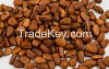 Hot sale Pine nut
