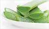 Fresh Aloe Vera Leaf