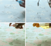 Printed Tablecloth (wi...