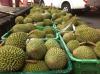Fresh musang king durian