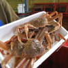Atlantic Cod FishMaw, ...