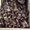 Dried Sarcodon Imbricatus