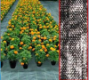 Agricultural Weed Mat/Landscape Fabric, PP /PE weed mat,PP Ground cover