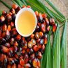 high quality palm oil made in Thailand