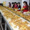 Thailand fresh ginger and garlic supplier