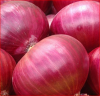 Hot Sell Fresh Yellow & Red Onion