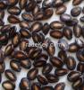black water melon seeds