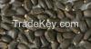 Jatropha seeds (Jatrop...