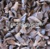 Palm Kernel Nut and Shell