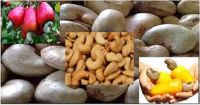 RAW CASHEW NUTS (ANACARDIUM OCCIDENTALE L.)